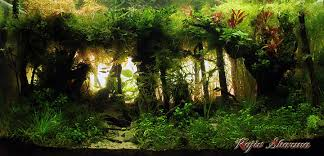 Aquascaping World Aquascape Of The Month June 2015