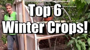 my top 6 crops for the winter garden youtube