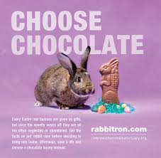 bunnies for easter happy easter don t buy a rabbit as an easter gift keala