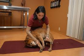compassionate vet care handling pets in a pet friendly manner