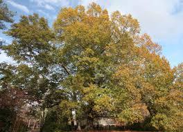 estimating the number of leaves on a tree j w teaford u0027s wetland