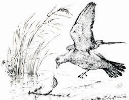 the ant and the dove compassionate san antonio