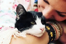hukum memandulkan kucing perpanjang usia kucingmu ini 8 fakta penting seputar sterilisasi