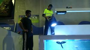 commercial led flood lights new maxspect commercial bright led flood lights youtube