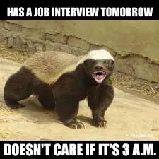 Meme Honey Badger - honey badger don t care but you may want to reconsider just saying