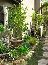 dwarf citrus trees planted in containers within the small garden