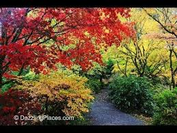 Washington State Botanical Gardens 8 Best Seattle Fall Colors Images On Pinterest Seattle Park And