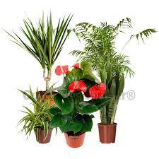 plante d駱olluante bureau pack 5 plantes dépolluantes d intérieur v1 matériel mur végétal fr