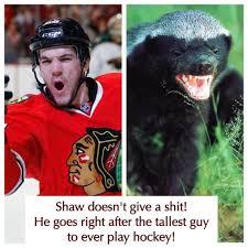 Andrew Shaw Meme - shaw honey badger hockey love pinterest honey badger chicago