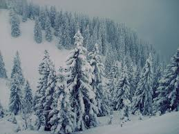 wallpapers tagged with pines page 2 snow winter pines forest pine