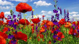 houston flowers top spots to see wildflowers in houston cbs houston