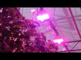 Greenhouse Lights Greenhouse Lighting Bright Lights Big Produce Youtube