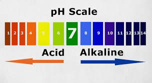 19 highly alkaline foods that will benefit your body yuri elkaim