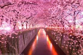 top 10 awesome cherry blossom viewing spots around area