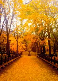halloween in new york city central park new york during fall beautiful go to www