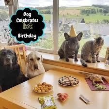 dog birthday party dog celebrates birthday with whole family pawsocute