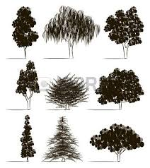 set of hand drawn tree sketches oak palm tree willow pine