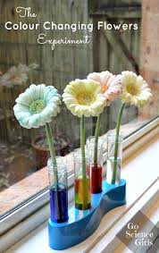 colour changing flowers experiment u2013 go science girls