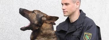 Erfolgreiche Teamarbeit: Hundeführer Lars Seidel gemeinsam mit seinem Schäferhund Aaron. Foto: dapd. Aaron schnüffelt gern fremden Menschen hinterher. - 0047CA7C_7635837BDA6062558339DD7FAA27CF8E