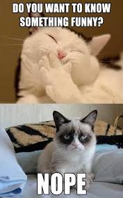 Tard The Grumpy Cat Meme - do you want to know something funny nope tard the grumpy cat