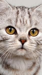 origami tabby cat u0027s face photo wp cat face drawing cat face paint