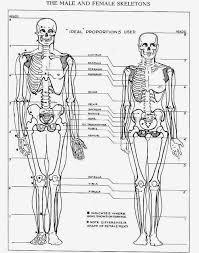 Google Human Anatomy Human Anatomy Skeleton Man And Women Differences Pesquisa Google