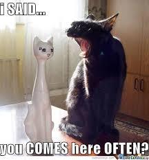 Talking Cat Meme - cat talk by pupurupu meme center