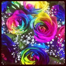 Colorful Roses The 25 Best Rainbow Roses Ideas On Pinterest Rainbow Flowers