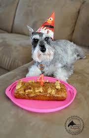 Birthday Cake Dog Meme - happy 4th birthday remington homemade dog cake and dog treats