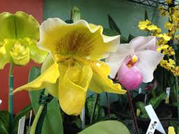 orchids for sale orchids for sale at kauai seascapes nursery