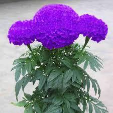 Flower Seeds Online - online get cheap flower garden plants aliexpress com alibaba group