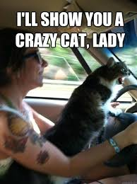 Funny Cat Lady Memes - i ll show you a crazy cat lady road rage cat quickmeme
