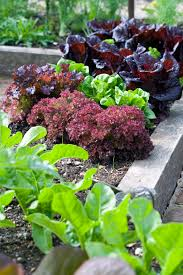 how to keep weeds out of garden home outdoor decoration