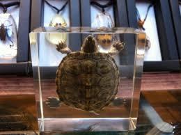 animals killed and encased in plastic jewelry aquanerd