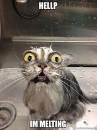 Melting Meme - hellp im melting cat bath make a meme