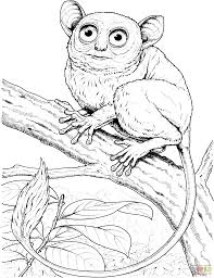 vulture coloring page monkey coloring page pygmy marmoset