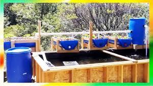 diy backyard aquaponics pond system youtube