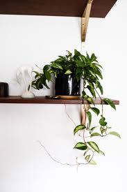 Herb Shelf 1466 Best Indoor Gardening Images On Pinterest Houseplants