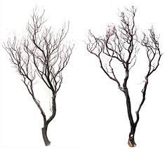 manzanita trees manzanita branches 48 in 2 blooms and branches