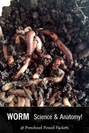 113 best worm unit images on pinterest worms life cycles and