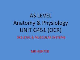 Anatomy And Physiology The Muscular System As Level Anatomy U0026 Physiology Unit G451 Ocr Skeletal U0026 Muscular