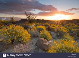 anza borrego super bloom sunrise anza borrego desert state park during 2017 superbloom stock