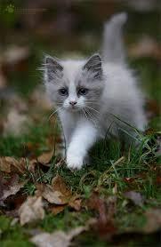 beautiful kittens 102 best kittens images on pinterest kitty cats funny animals