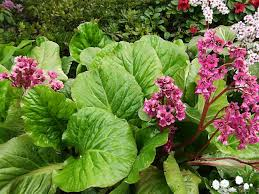 Flower Shrubs For Shaded Areas - trees and shrubs that will grow in the shady part of your garden