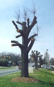tree topping greensboro nc