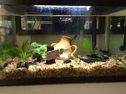 3 ways to creatively decorate a freshwater fish tank wikihow