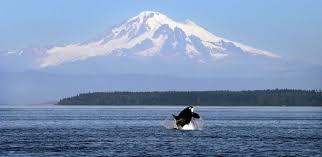 Washington Wildlife Tours images Less whale tours dams washington task force returns with jpg