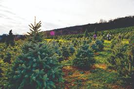 loudoun christmas tree growers prepare for rush u2013 loudoun now