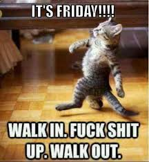 Friday Cat Meme - happy friday meme that will make best weekend betameme