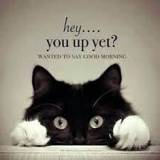 Sweet Memes - funny cute silly good morning memes